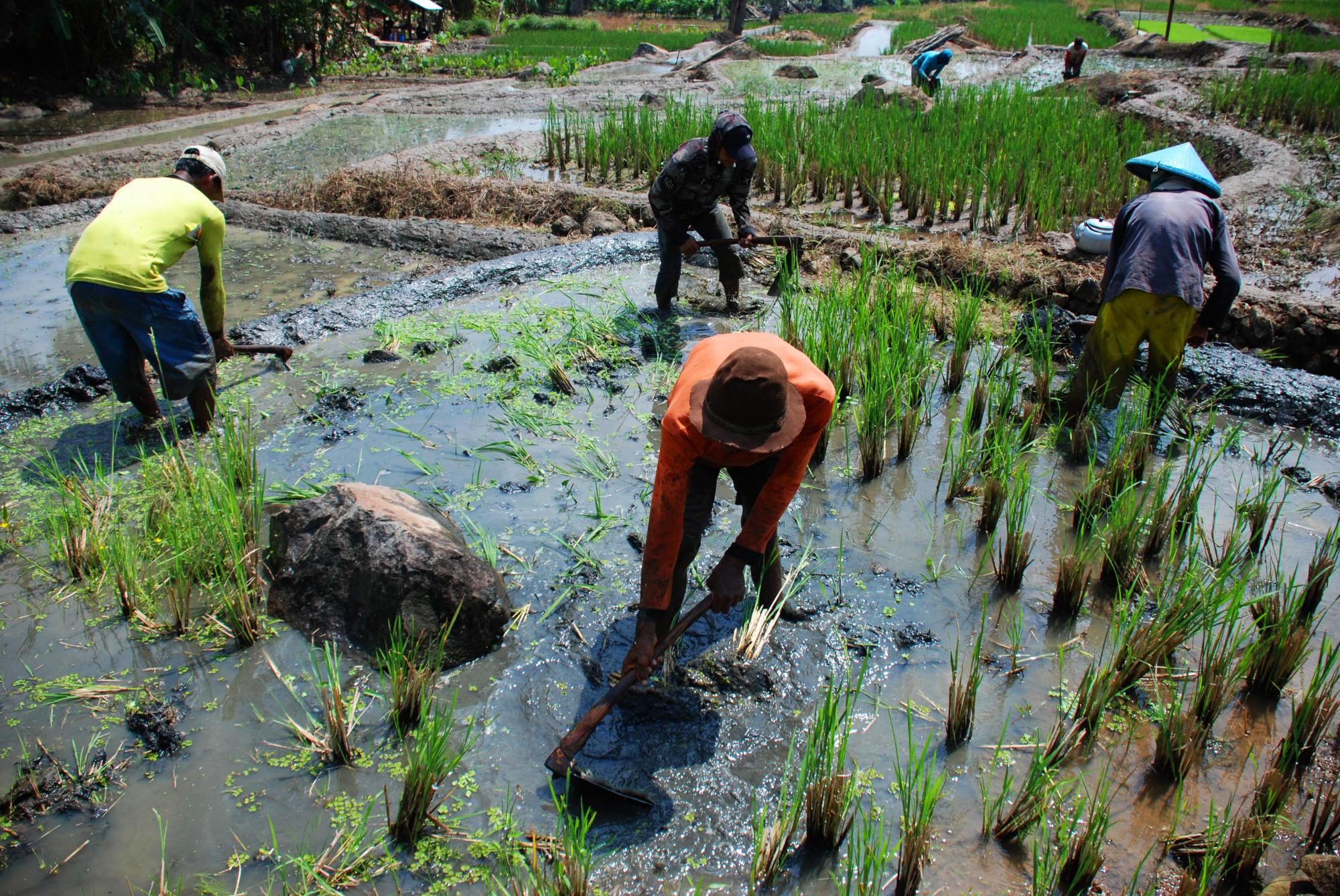 Indonesia Terancam Kehilangan Petani