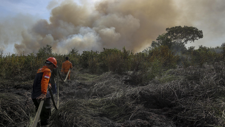 Kematian Dini Mengintai Di Balik Asap Kebakaran Hutan Tirto Id