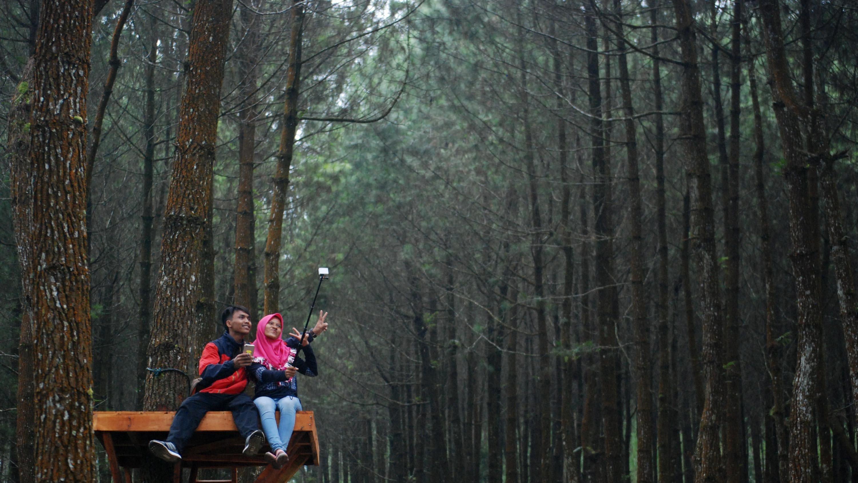 Potensi Wisata Hutan Pinus Kragilan