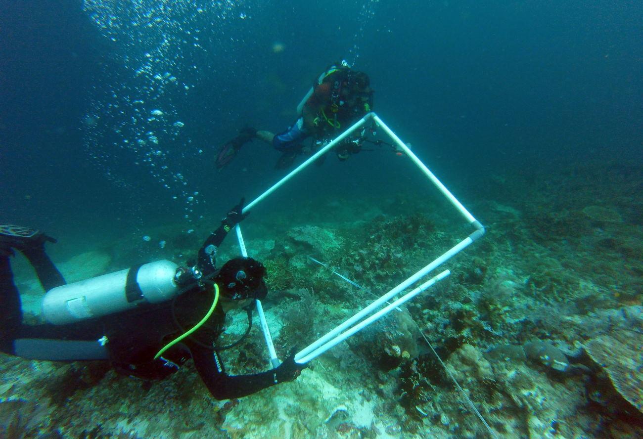 Terumbu Karang Raja Ampat yang Rusak 22 Ribu Meter Persegi