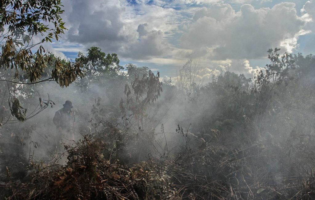 2,7 Juta Hektare Hutan Hilang Selama Moratorium Lahan Gambut