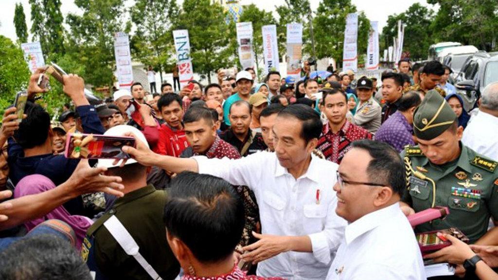 Jokowi Pimpin Peremajaan Kebun Kelapa Sawit di Sumsel