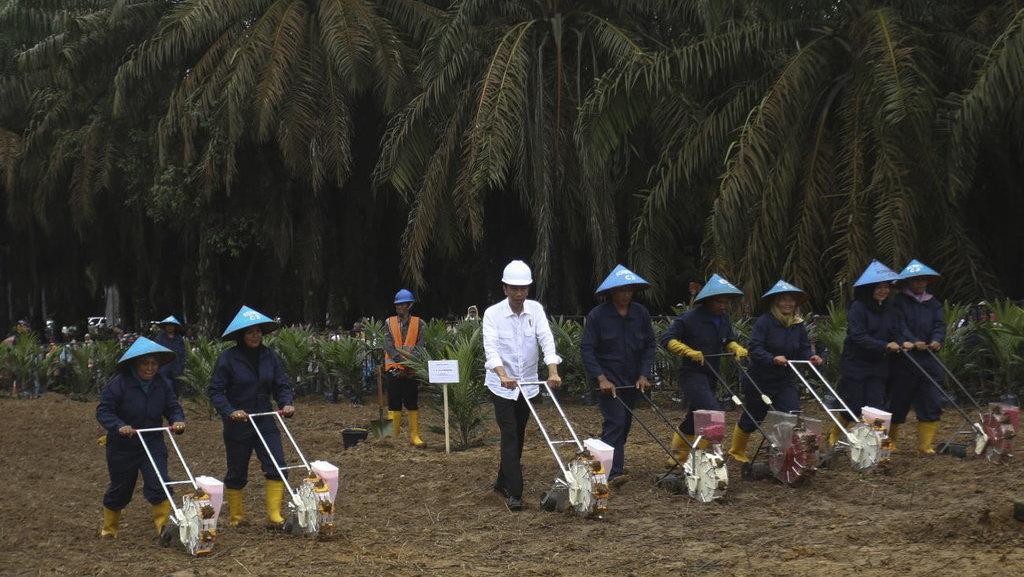 Proposal Baru Parlemen Eropa Ancam Industri Kelapa Sawit Indonesia