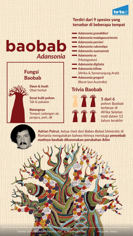 infografik baobab