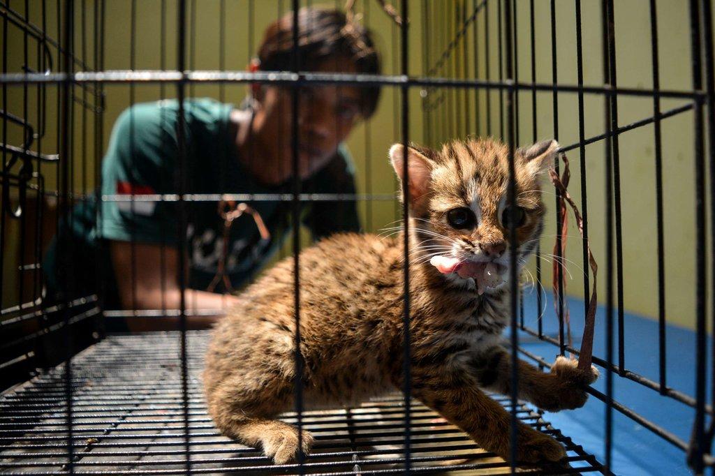 Hukuman Yang Bisa Menjerat Penyiksa Kucing Pakai Ciu Tirto Id