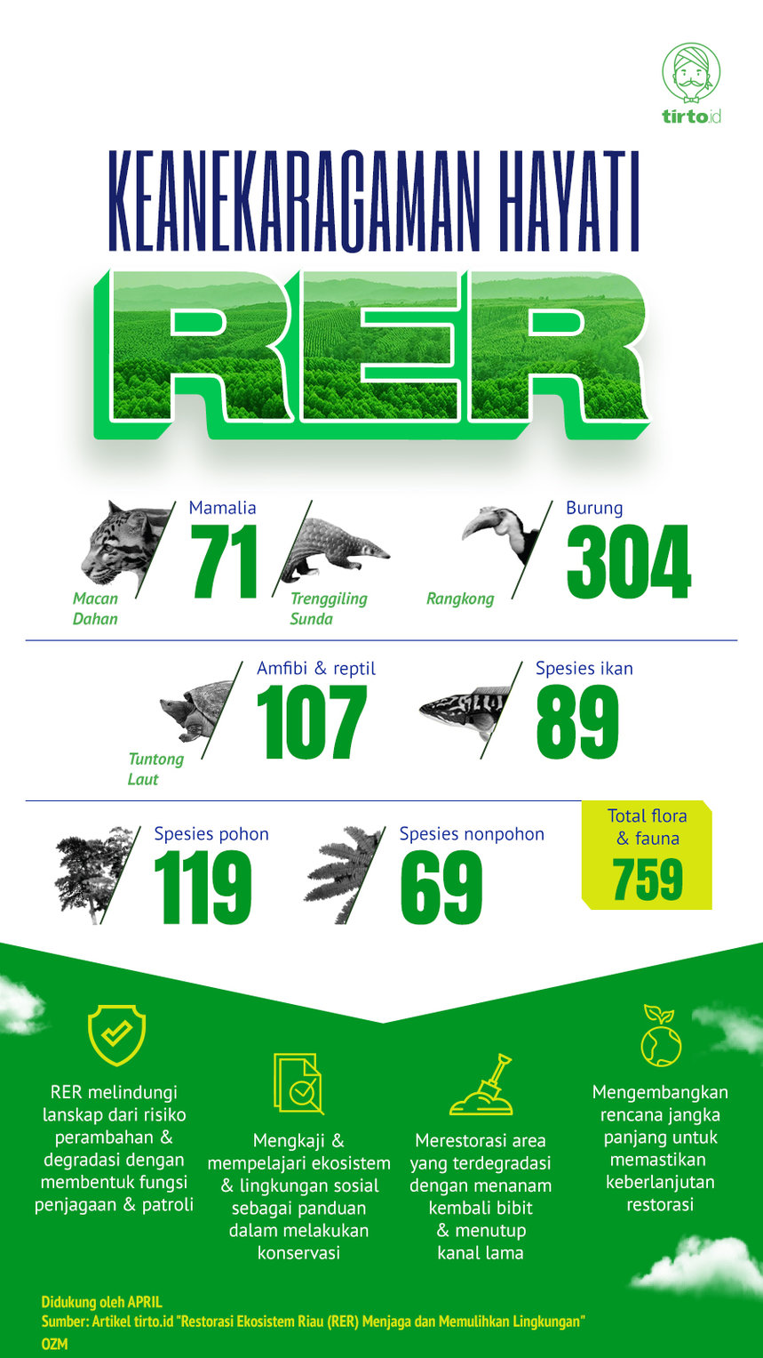 Infografik Advertorial RAPP 4