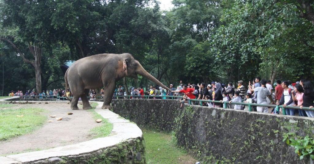 Sejarah Kebun Binatang Pertama di Indonesia - Tirto.ID