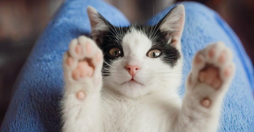Ketahui 6 Bahan Alami Untuk Basmi Kutu Pada Kucing Peliharaan Tirto Id