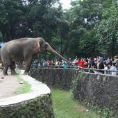 Sejarah Kebun Binatang Pertama di Indonesia