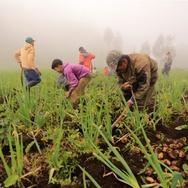 Para Petani dari Balik Kabut