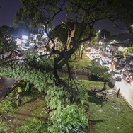 Hujan Angin di Jakarta Sebabkan Banjir dan 33 Pohon Tumbang