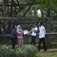 Jokowi Kunjungi Ragunan