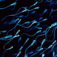 Mengapa Jumlah Sperma Pria di Barat Turun hingga 50 Persen?