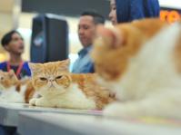 Kucing Jadi Lebih Sehat Makan dengan Porsi Kecil