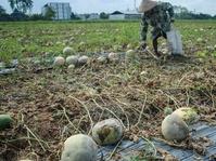 LBH Desak Pemerintah Atasi Kriminalisasi Petani