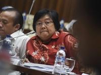 Menteri LHK: Lahan Gambut Potensial Ditanami Sengon