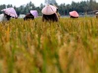 Mentan Targetkan Indonesia Jadi Lumbung Pangan Dunia 2045