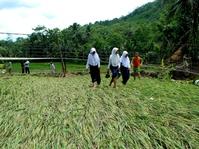 Sawah Rusak Teredam Banjir Bandang