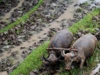 Pengamat Katakan Petani Mulai Meninggalkan Profesinya