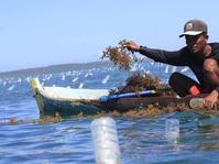 Petani Rumput Laut NTT Menang Gugatan di Australia