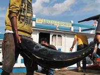 Kritik atas Kebijakan Menteri Susi di Industri Ikan Tuna