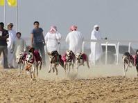 Anjing Saluki Sobat Suku Badui Arab