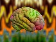 Betapa Misteriusnya Otak dan Ingatan Manusia