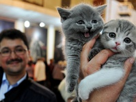Kurangi Stres Karyawan, Perusahaan Sediakan Kucing di Kantor