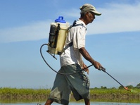 Indonesia Krisis Regenerasi Petani Muda