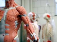 Menanti Produksi Listrik dari Aliran Darah Manusia