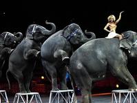Melankoli Sirkus dalam Pertunjukan Terakhir Ringling Bros