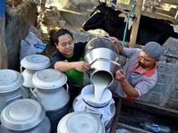 Peliknya Masalah Persusuan di Indonesia