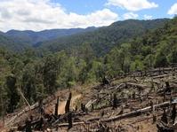 Menyelamatkan Leuser, 'Harta Karun' Sumatera