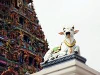 Film India Sensor Kata 'Sapi' dan 'Hindu' Terkait Isu Agama