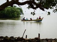 Mangrove Menahan Abrasi