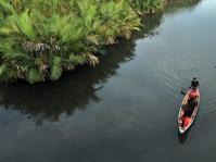 Pangan Alternatif Ada di Hutan Mangrove
