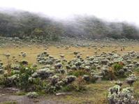 Pemetik Bunga Edelweis Dikenai Sanksi Pidana Lima Tahun