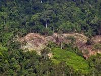 Aktivis Lingkungan Tuntut Penyelesaian Konflik Agraria di Seluma