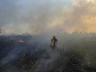 Kebakaran Lahan di OI