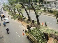 Proyek Asian Games Korbankan Ribuan Pohon di Jakarta