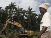 Afrika Perlu Belajar dari Efek Industri Sawit di Indonesia