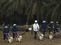 Menteri Darmin Klaim Peremajaan Kebun Sawit Tak Rambah Hutan