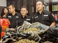 Polisi Ciduk Tersangka Pembuat Magic Mushroom Mengandung Narkotika