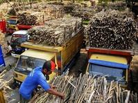 Revitalisasi Pabrik Gula Tak Semanis Rencana