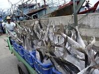 Hasil Tangkapan Nelayan di Muara Angke Menurun