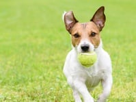 Berbahayakah Air Liur Anjing?