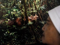 Citra Badak Sumatera Dalam Karya Rupa