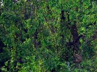Habitat Monyet Muara Angke