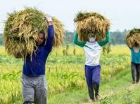 KRKP Desak Pemerintah Ubah Harga Pembelian Gabah Petani