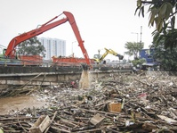 Pemprov DKI Akan Ubah Kawasan Kali Adem Jadi Hutan Mangrove